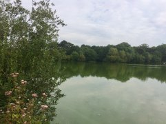 Hatfield forest lake