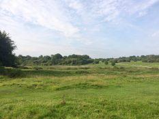 Landscape view park