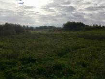Gunpowder Landscape 3