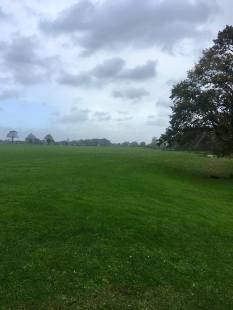 Upton course grass