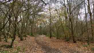 Banstead Woods cover