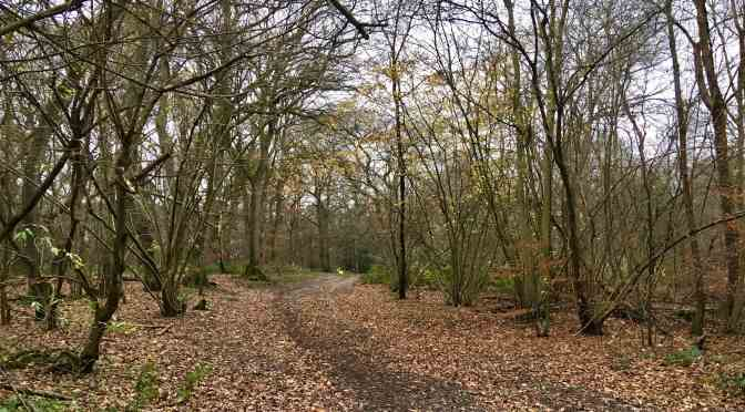 Event 68 Banstead Woods
