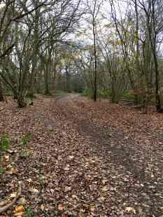 Banstead Woods trail 1