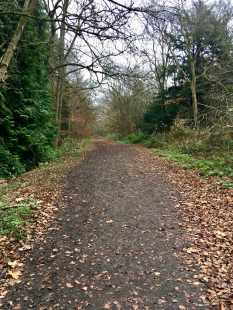 Banstead Woods trail 2
