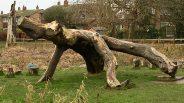 Log creature