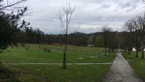 Brentwood landscape 3