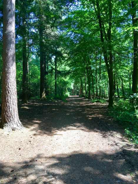 Black park course view 3