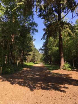 Black park landscape 2