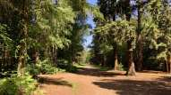 Black park landscape