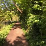 Gravel woodland path2