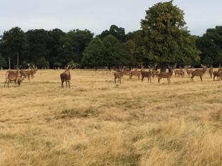 Richmond Park Heard shot