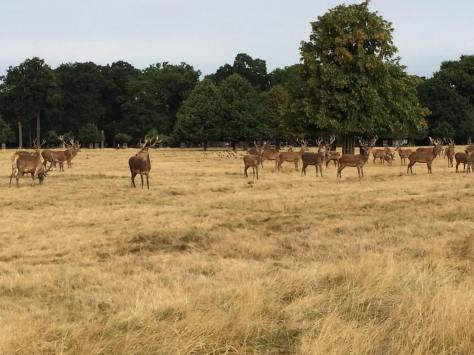 Richmond Park Heard shot