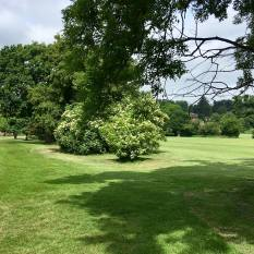Castle Park course grass 1