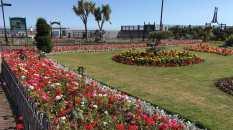 Clacton gardens