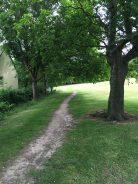 Course grass