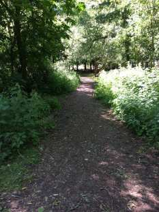 Aldenham course woodland trial