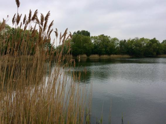 Bedfont Lake view