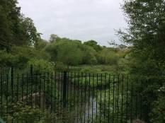 Crane nature reserve