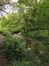 Ravensbourne river 1