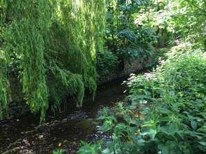 Ravensbourne river 2
