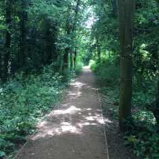 Spinney woodland walk