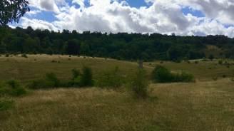 Tring park landscape