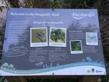 Dragonfly Trail info sign