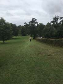 Gadebridge course grass 2