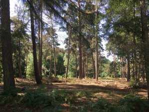 Landscape Rushmere