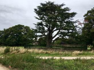 Houghton Hall landscape 3