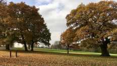 Catford landscape