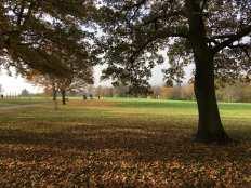Mountsfield landscape 2