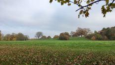 Mountsfield landscape 3