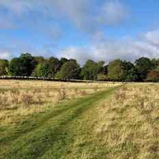 Wimpole course