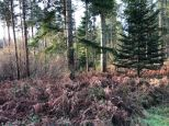 Alice Holt forest 1