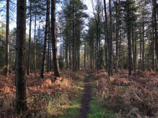 Alice Holt forest 2